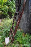 Rusty Ladder To TheRoof