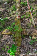 Abandoned, Rotting Totem Pole