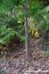 Overgrown Water PowerPlant