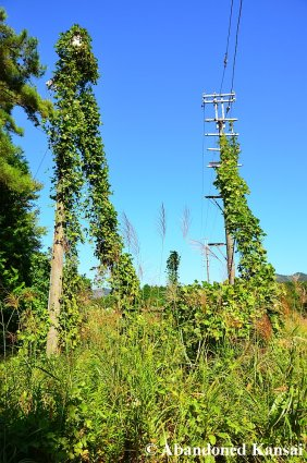 Overgrown Electricity Pole