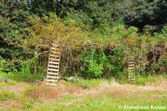 Abandoned Garden
