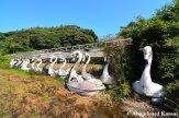 Abandoned Paddleboats