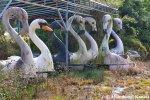 Black Swan, White Swan,Flamingo