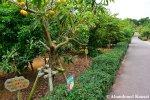 Okinawa World Garden