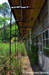 Partly Overgrown School