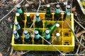 Abandoned Löwenbräu Bottles