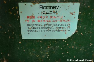 All You Need To Know About Romney