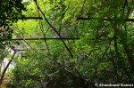 Overgrown Safety Net