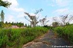 Overgrown Themed Park