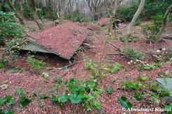 Abandoned Bungalow Village