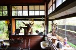 Rustic Japanese Restaurant