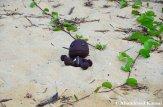 Sackboy At A Beach In Okinawa
