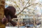 Sackboy Does Hanami In A Park In Osaka