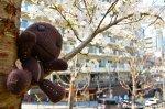 Sackboy Does Hanami In A Park InOsaka