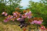 Sackboy Does Hanami On A Mountain In Wakayama