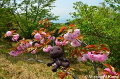 Sackboy Does Hanami On A Mountain In Wakayama