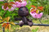 Sackboy Enjoys Hanami