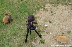 Sackboy On Okunoshima - The Rabbit Island