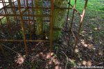 Trees Growing Through An Abandoned JungleGym