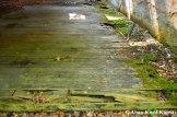 Wooden Floor Beyond Repair