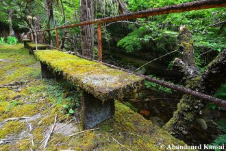Bench Overgrown With Moss