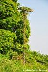 Overgrown Lighting Pole