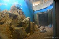 Abandoned Fish Tank
