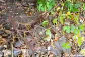 Overgrown Wheelbarrow