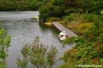 sinking-paddle-boat