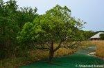 tree-growing-through-a-minigolf-track