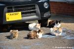 Cats Enjoying TheSun