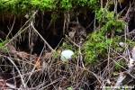 Abandoned Golf Ball