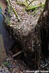Collapsed Corrugated IronRoof
