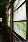 Overgrown Hospital Window