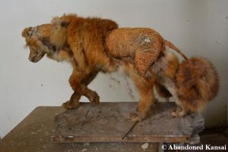 Fox Poodle