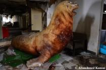 Taxidermy Seal