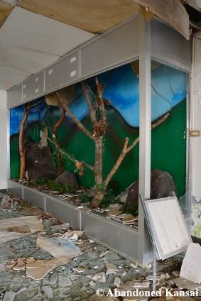 Taxidermy Wildlife Display