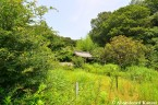 Overgrown Japanese Mission