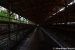 Empty Chicken Cages