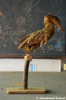 Taxidermy Bird Japan