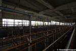 Abandoned Pig Farm