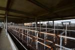 Kagoshima Pig Farm