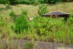Overgrown Abandoned Playground