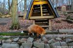 fox village injapan