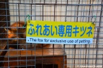 the fox for exlusive use ofpetting
