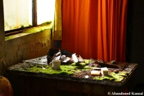 Moss Covered Office