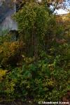 Overgrown Iron Rods