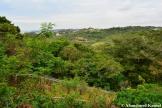 Overgrown Park