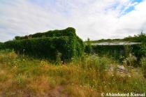 Abandoned Overgrown Plant Nursery