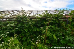 Overgrown Abandoned Glasshouse